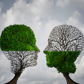 50924294 - complement each other concept as two trees with half of the tree with full leaves and the other with none as a business or life metaphor for synergy and alliance with an equal partnership with common interests.